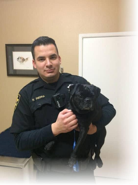 Police and black pug
