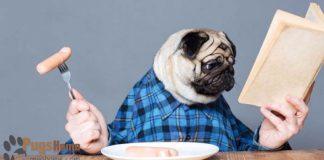 eating breakfast pug