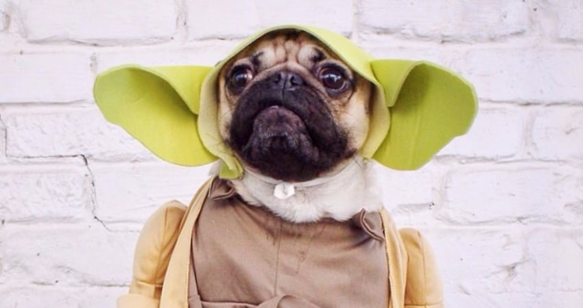 pug in star wars costume