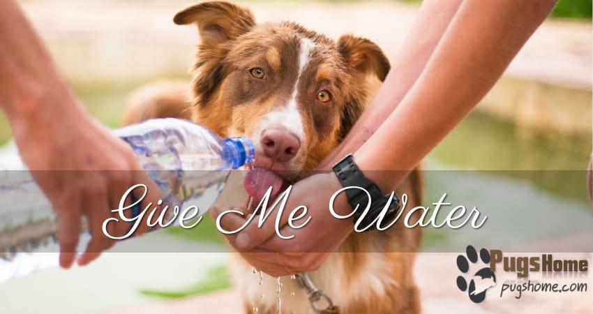 dog need water