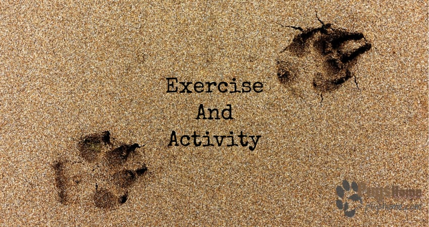pug Exercise And Activity