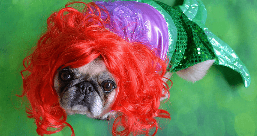 Little Mermaid Pug