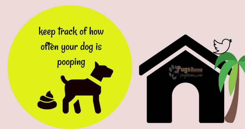 keep track of how often your dog is pooping
