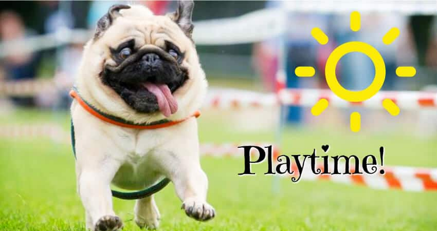 fix playtime with pugs