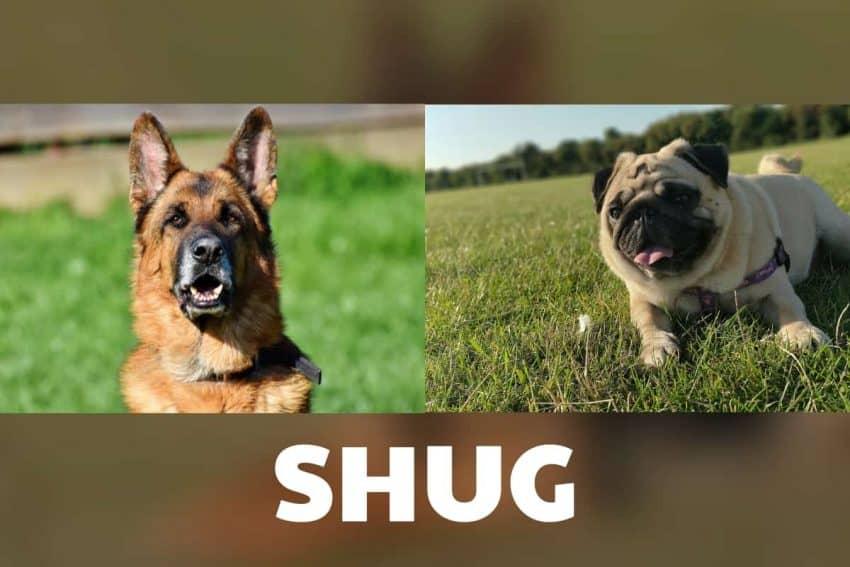 what is shug?