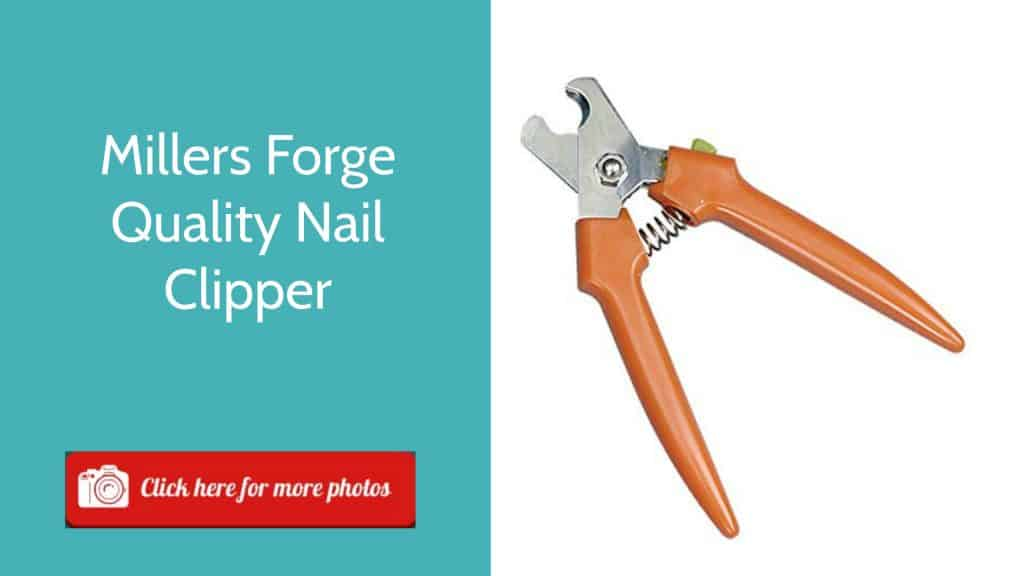 Best Dog Nail Clippers Top 5 Reviews In 2018