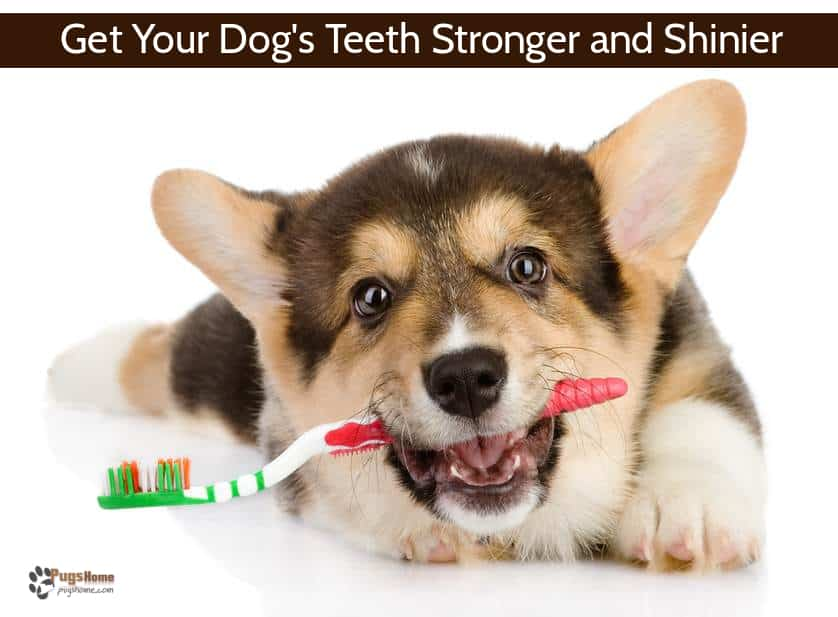 The Dog Owners' Definitive Guide to Homemade Dog Toothpaste