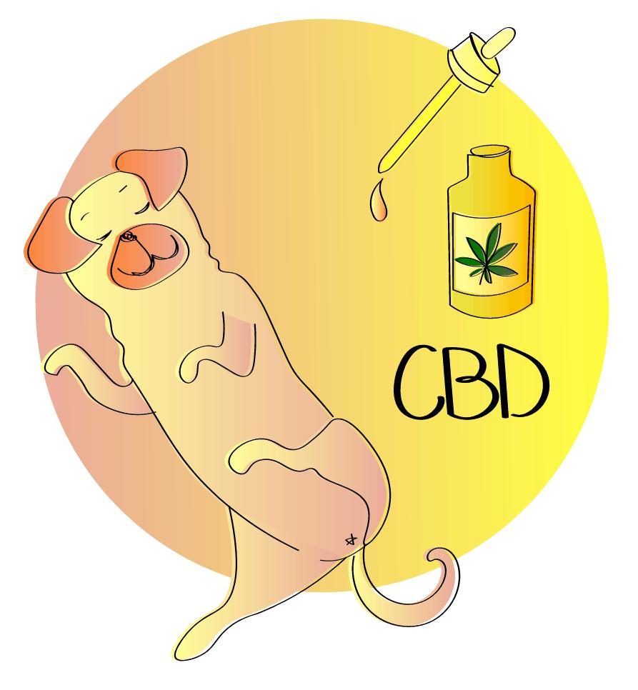 CBD Oil for doggy