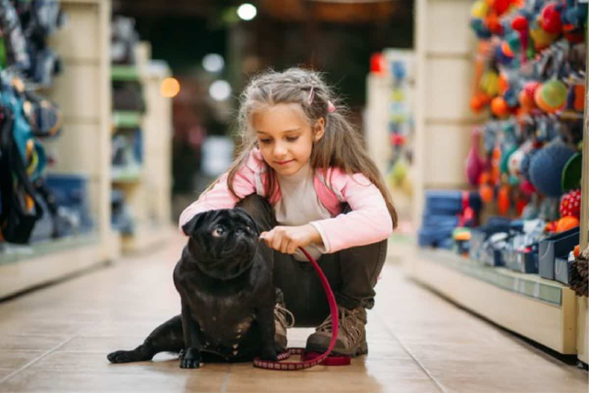 Are Pugs Good With Kids