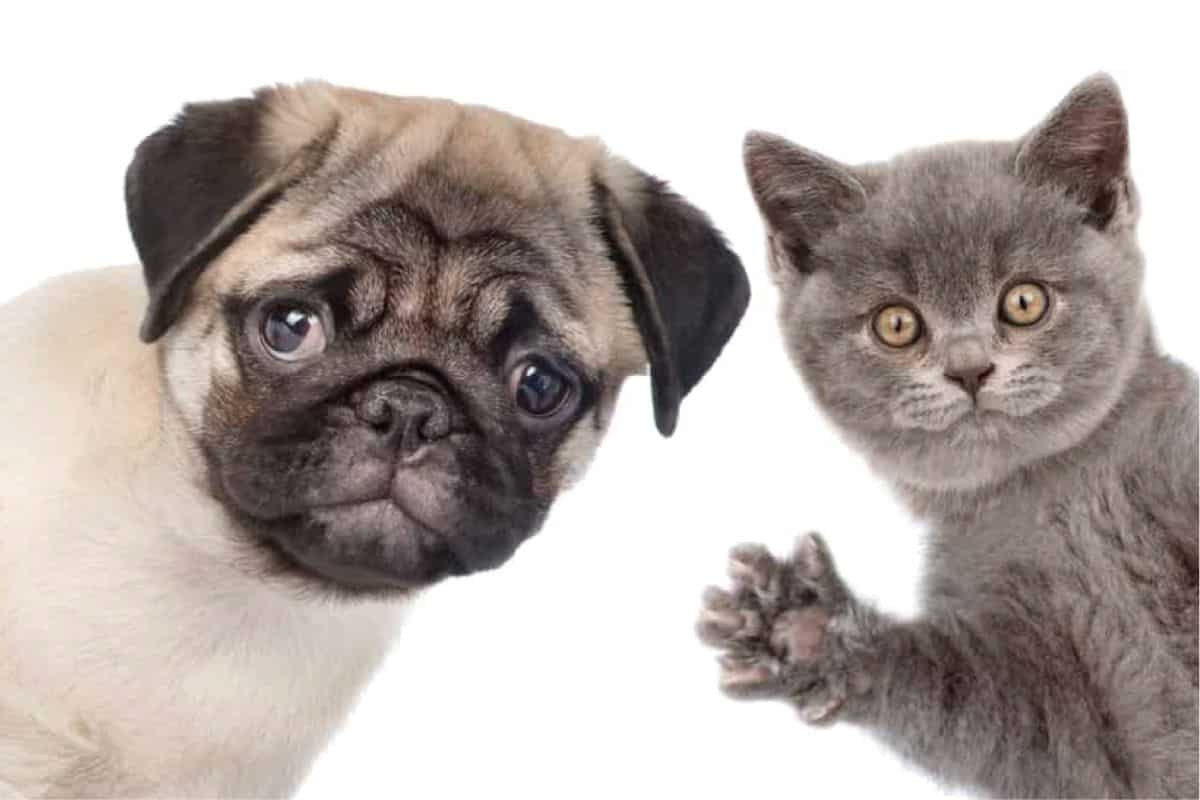 Learn A Few Reasons Why Dogs Are Better Than Cats