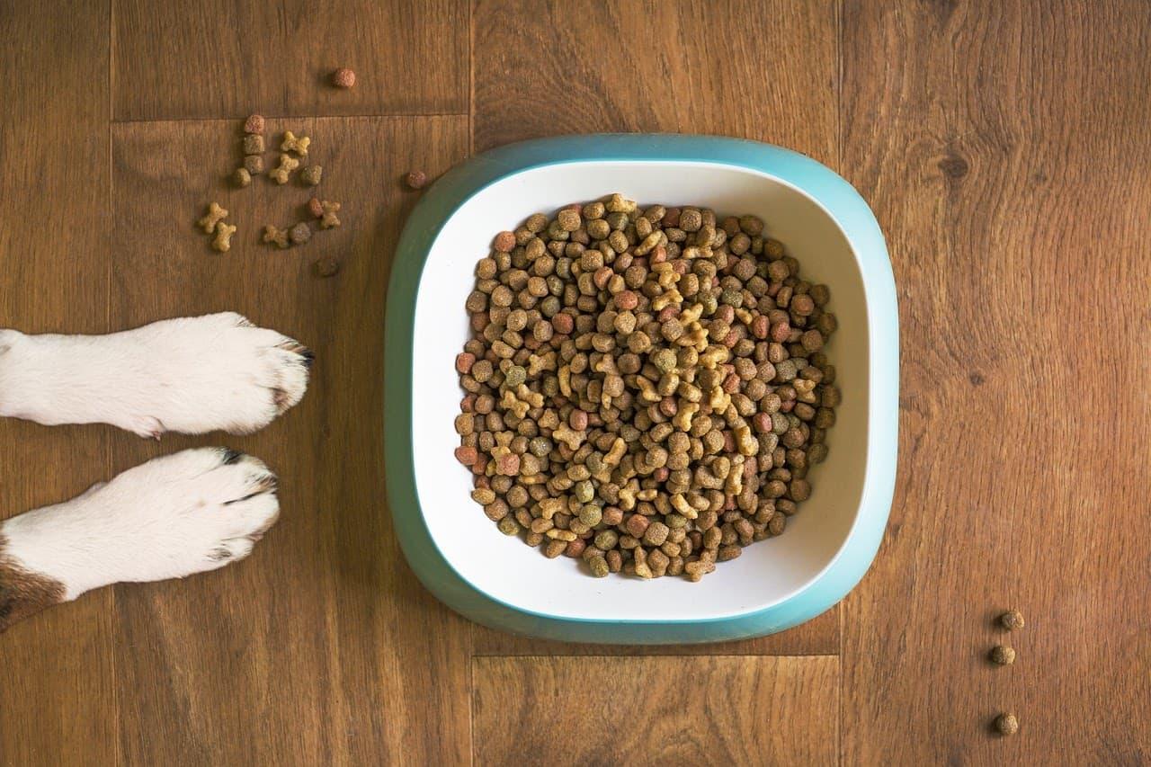 best food for dog
