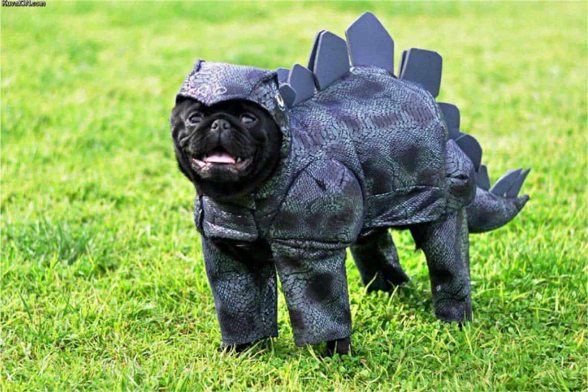 pugs-costumes