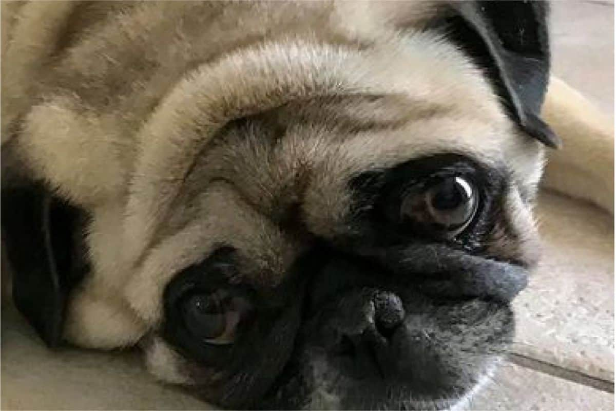 Your 45 Minutes Guide to Dogs with Down Syndrome